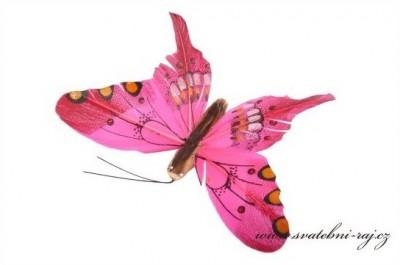 Motýlek z peří fuchsia