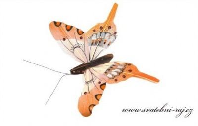 Motýlek z peříček