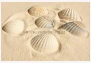 Zobrazit detail - Mořské mušličky