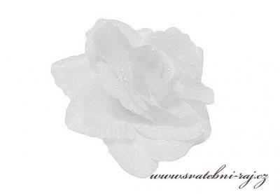 Vazbová růže bílá