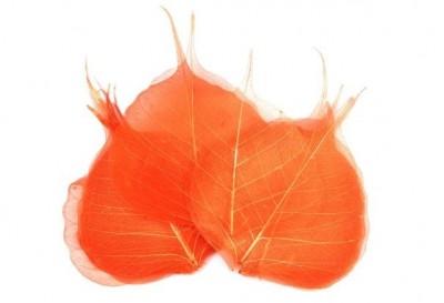 Skelet listu oranžový