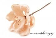 Zobrazit detail - Lososový květ