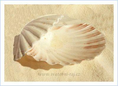 Dekorační mušličky a lastury pro svatbu na pláži velká mušle