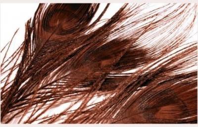 Paví peří v hnědé barvě