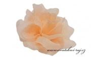Taftová růže meruňková