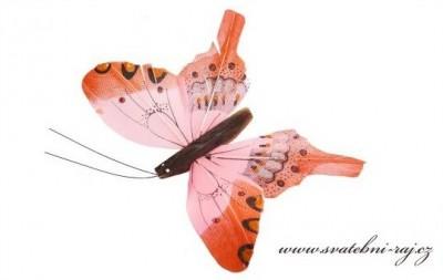 Motýlek oranžový