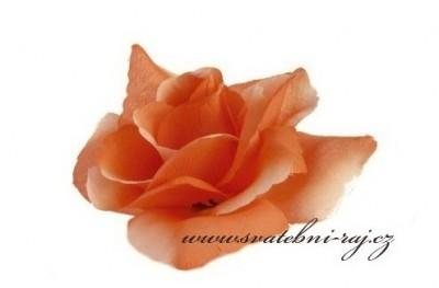 Taftová růže vazbová