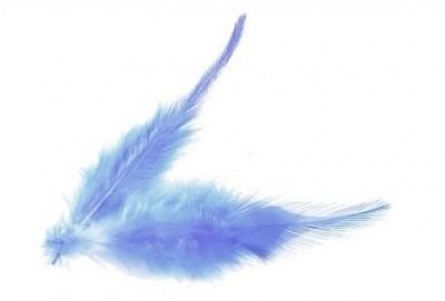 Peříčka modrá