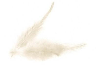 Peříčka smetanová