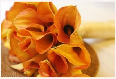 Kala oranžová