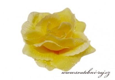 Vazbová růže žlutá