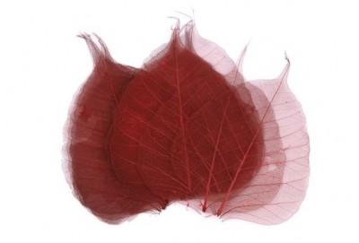 Skelet listu vínový