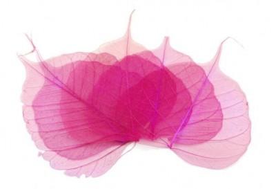 Skelet listu růžový