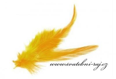 Peříčka žlutá