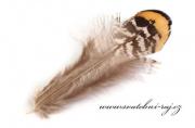 Zobrazit detail - Bažantí peří hnědé