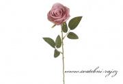 Růže starorůžová na stonku