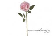 Růže světle růžová na stonku