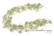 Zobrazit detail - Girlanda nevěstin závoj