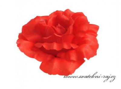 Krásná červená růže