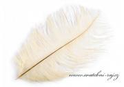 Zobrazit detail - Luxusní pštrosí peří krémové barvě