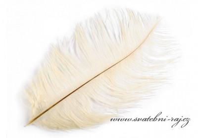 Luxusní pštrosí peří krémové barvě