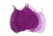 Zobrazit detail - Dekorační skelet listu švestkový