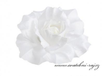 Velká bílá růže vazbová